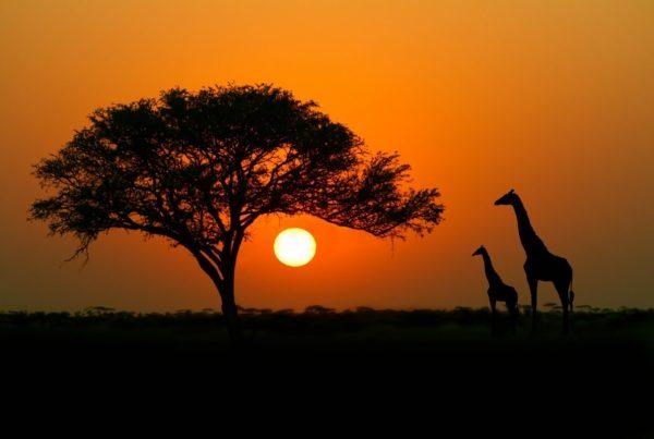 فریت بار به آفریقا