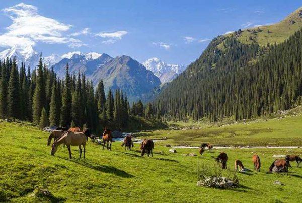فریت بار هوایی به قرقیزستان
